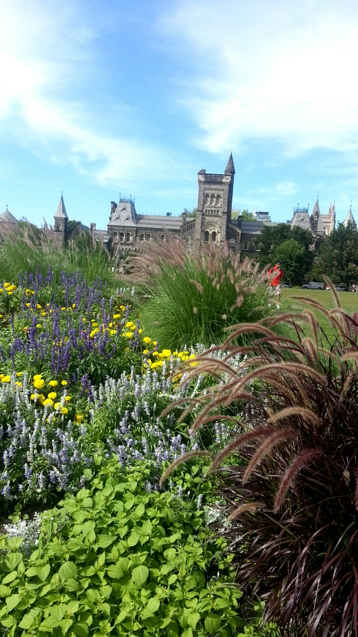 An arrangement of shrubs and flowers partially cover front campus and University College