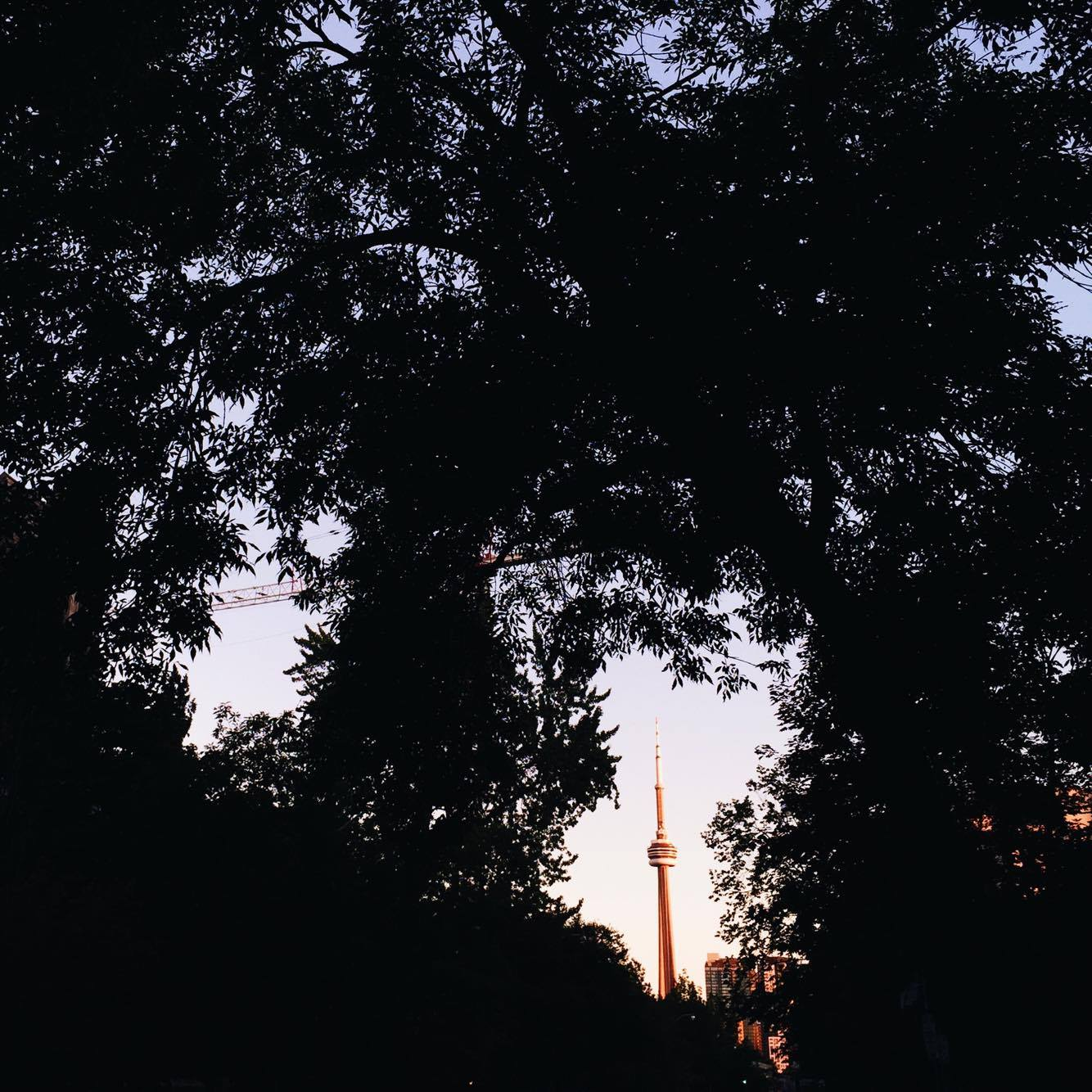 "ALT=""The CN Tower framed by trees"""