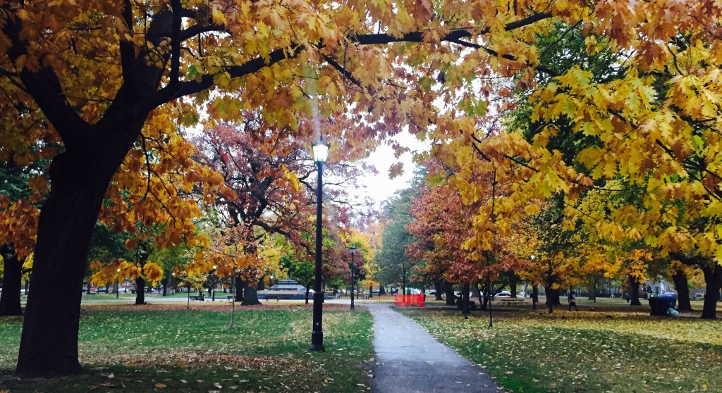 Queen's Park in the fall.