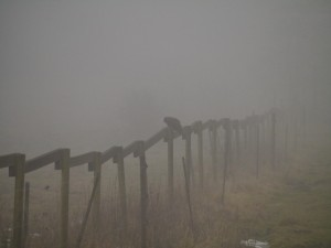 A sinister bird in the mist