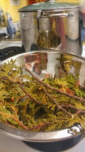 Cedar tea brewed at First Nations House