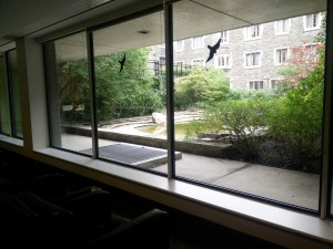 A student lounge on the ground floor of E.J Pratt Library looking outside at the garden