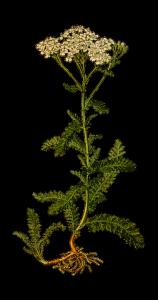 Branch/flower medicine