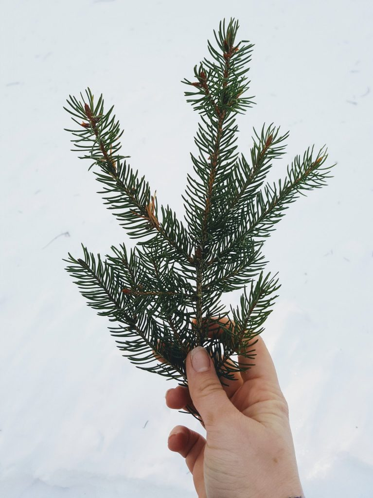 A hand, holding a sprig of pine against a backdrop of snow