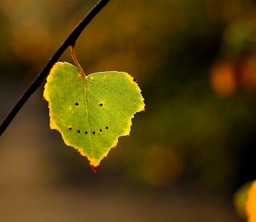Leaf with smiley face