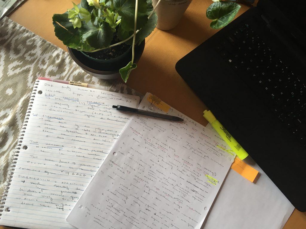 Photograph of written out notes, plant and laptop