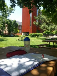 picnic tables under a tree with homework on them