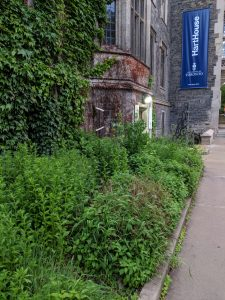 An image of the greenery outside of Hart House with the blue Hart House banner in the background