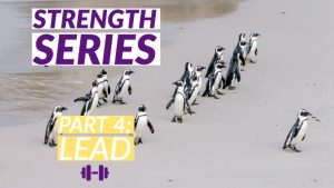 Strength Series Part 4: Lead banner with group of penguins in the background