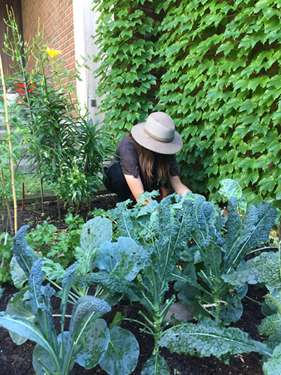 This is a photo of me digging at one of the campus gardens. I now co-coordinate the group, Dig In!, that runs these. It's been a blast. Caption: How I've been engaging with the UofT Community.