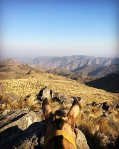 Photograph: mountain range, yellow/tan in color, top of horses head, view from on top of the horse, blue sky
