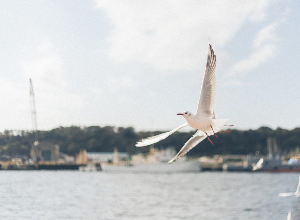 A seagull flying over the shore.