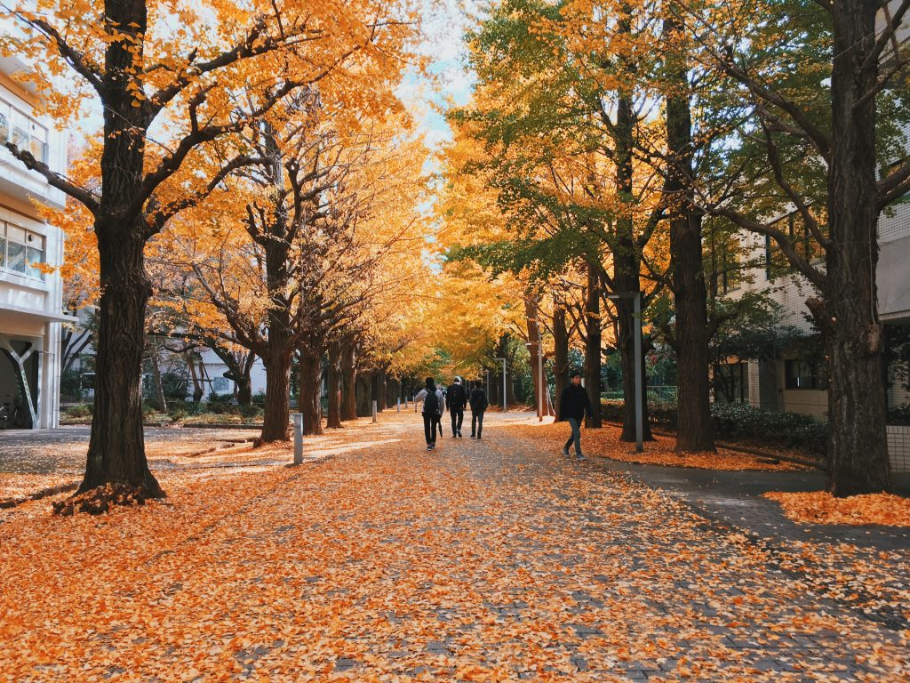 A photo of trees lining a pathway, and leaves on the ground at the UTokyo campus.