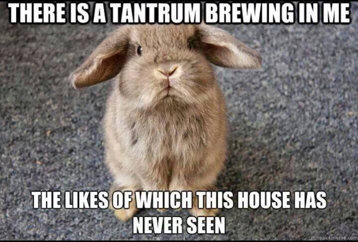 "A picture of a bunny with the caption ""There is a tantrum brewing in me, the likes of which this house has never seen."""