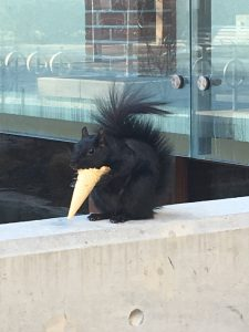 Squirrel eating an ice cream cone.