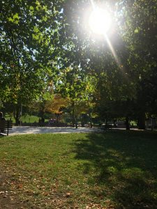 A park with sunlight streaming through the trees