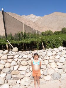 My younger self standing in front of grape wines in El Valle del Elqui. Moutains are seen in the backgroung