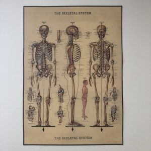 Skeleton system decoration poster.