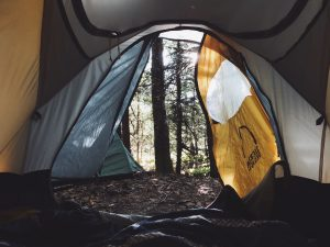 View of the forest from tent