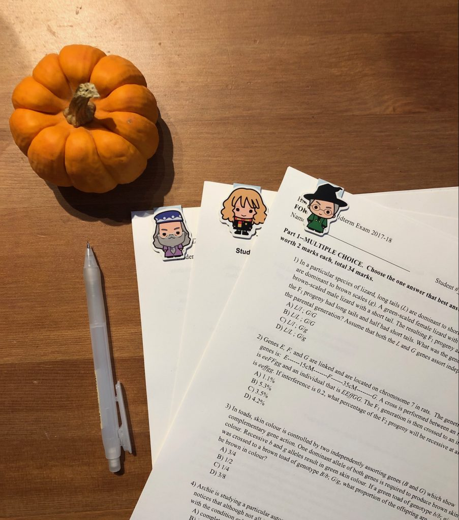 Picture of practice HMB midterm packages and a pumpkin in the corner of the table.