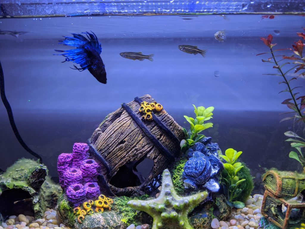 Fish tank with three fish and a barrel decoration