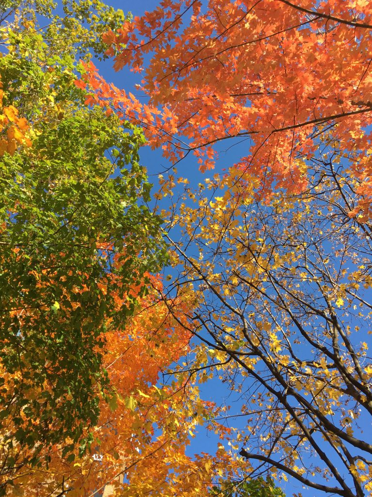 The sky interrupted by multicoloured fall leaves.