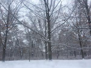 Snow covered, barren trees. Taken in High Park.