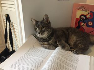 A picture of a cat sitting on a textbook