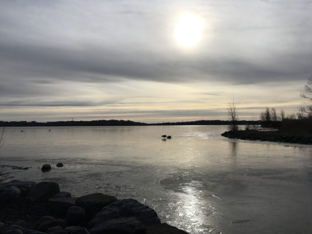 The sun is high in the cloudy sky, above frozen water. There are ducks sitting in the water, and there is an island in the distance.