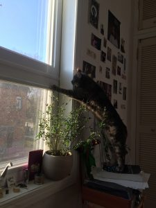 A picture of a cat sitting at a window