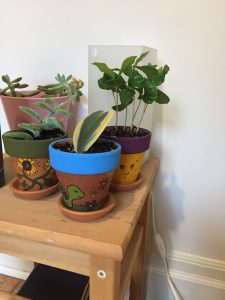 A picture of three plants