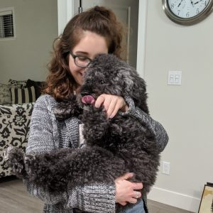 Person holding black miniature poodle