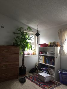A picture of a money tree in a bedroom