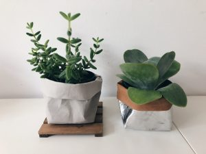 picture of 2 plants with personalized pots