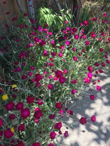 A picture of flowers on the side of a road.