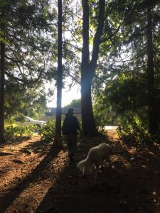 A picture of a person walking a dog in the forest