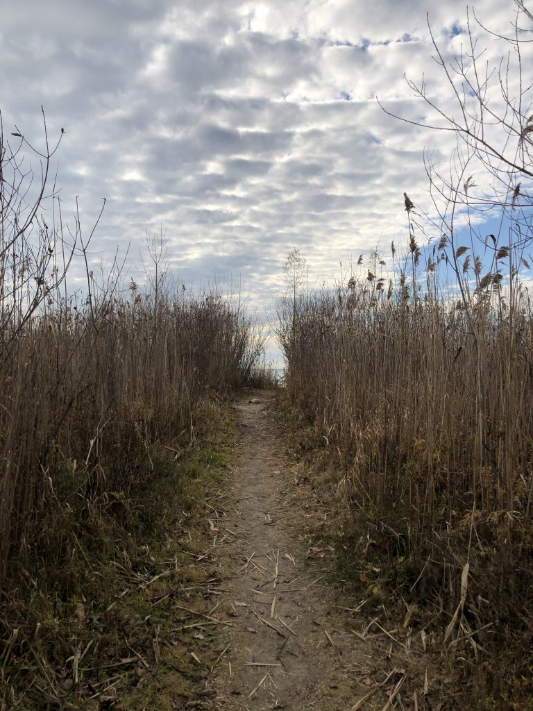 Beach pathway with reeds and clouds.