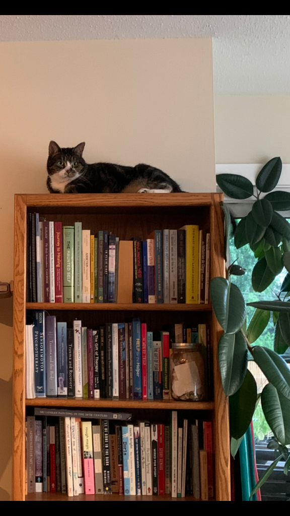 A picture of a cat sitting on a book shelf
