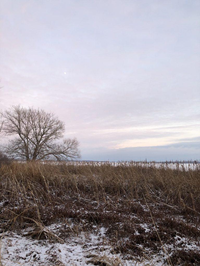 Winter lake, purple sky, and tree.