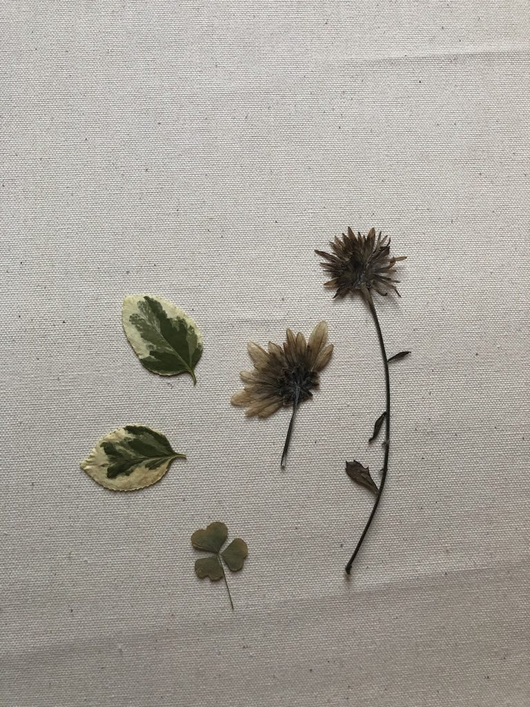 pressed flowers and leaves