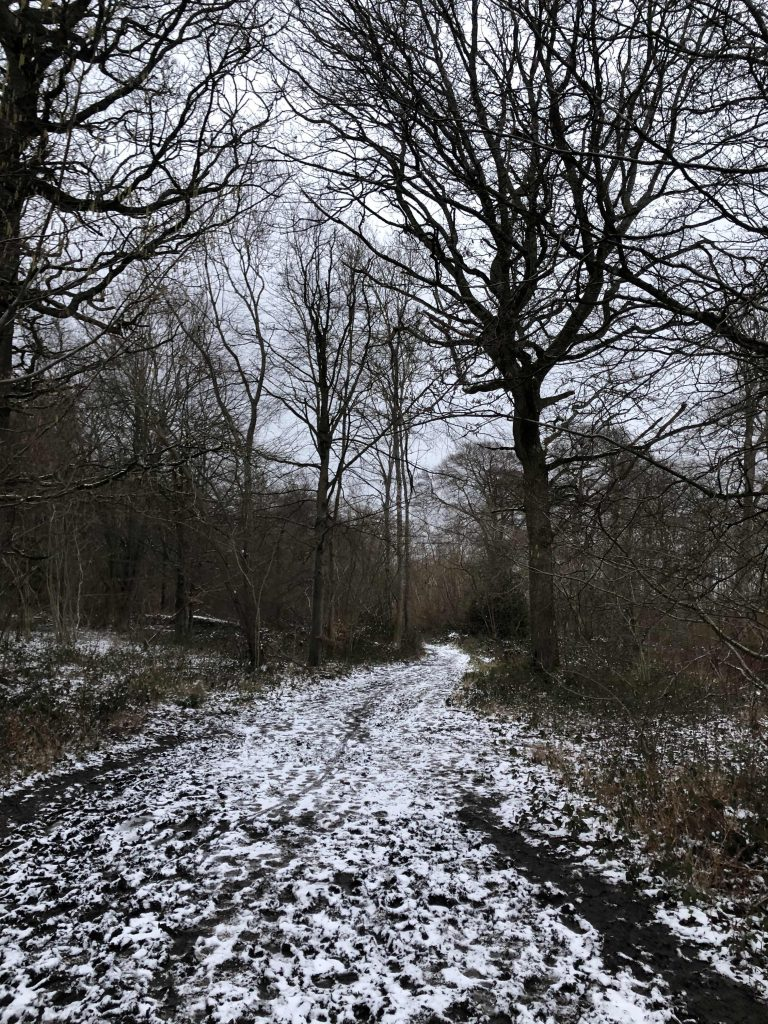 Snowy path in the countryside