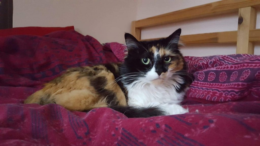 A picture of a calico cat sitting on a bed
