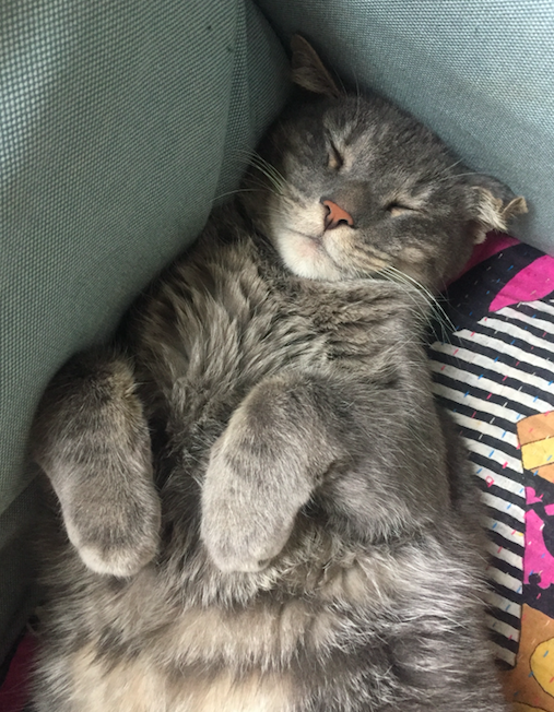 A picture of a grey cat lying on a blue armchair asleep
