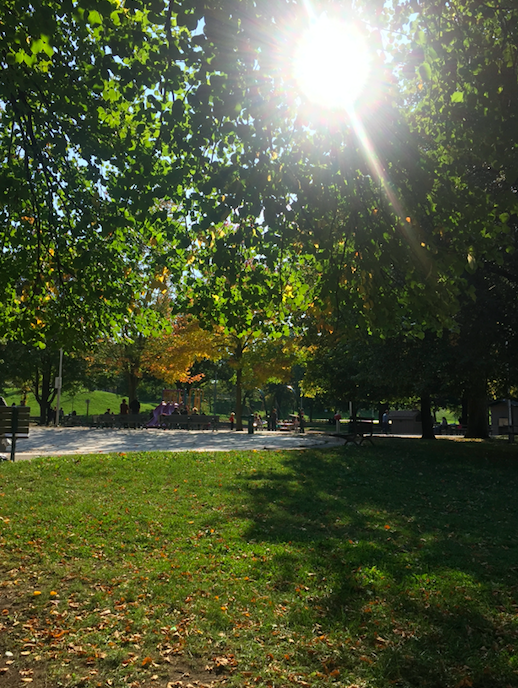 A picture of a grassy area with trees at Christie Pits park
