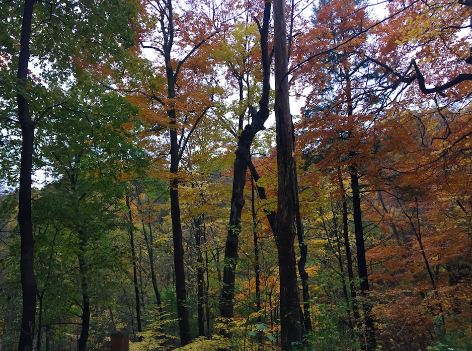 A picture of trees in a wooded area
