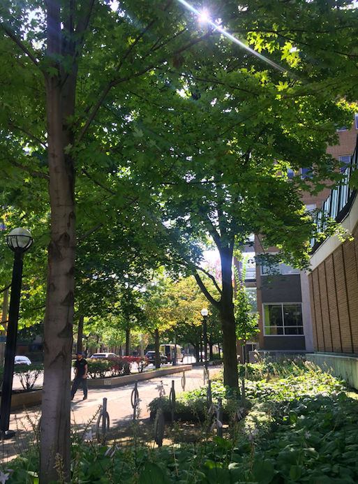 A picture of St. George street on the UofT campus