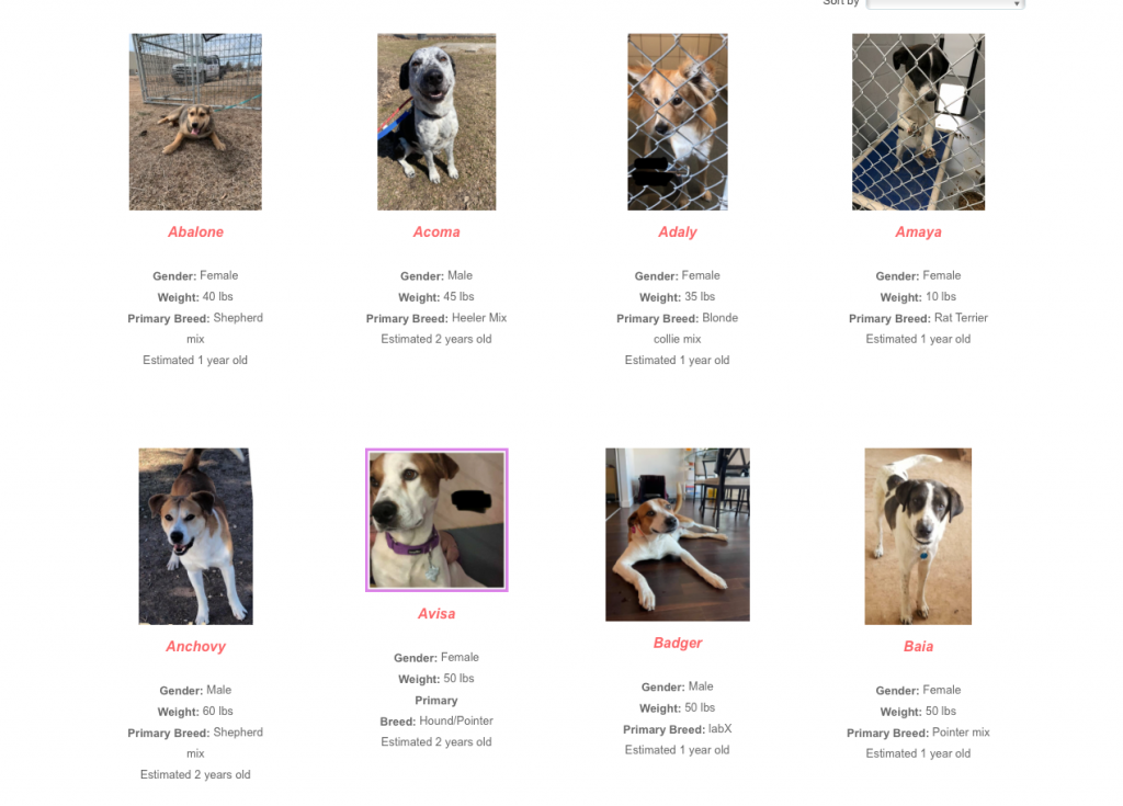 Adoption dogs on Redemption Paws website