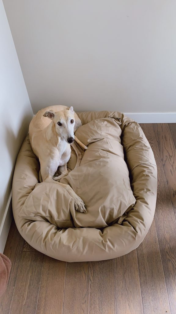 fawn-colored dog on beige bed
