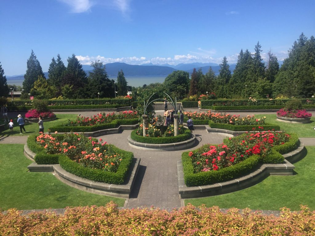A picture of a rose garden with mountains and ocean in the background at the University of British Columbia
