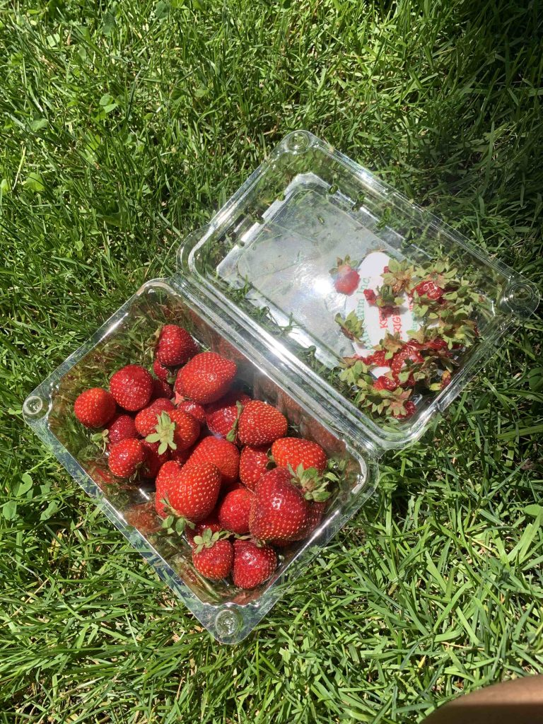 a box of strawberries half finished in a clamshell, on the grass